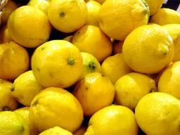 Fresh lemon fruits for sale