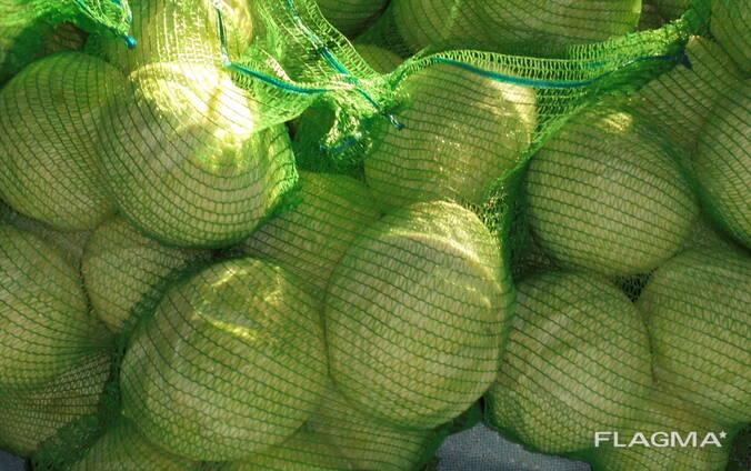 Cabbage wholesale Kazakhstan